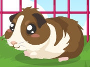 Click to Play Guinea Pig Care